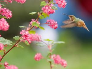 Hummingbirds03