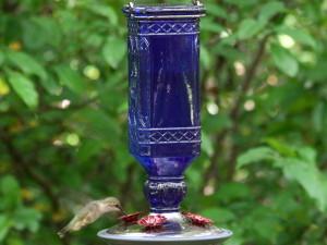 Hummingbirds04
